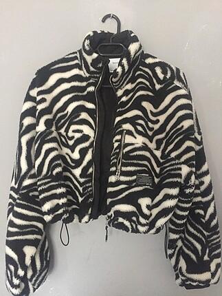 bershka zebra desen